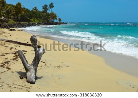 Natural tree sculpture on a beautiful tropical beach on a small remote Great Corn Island in the Caribbean Sea, Nicaragua