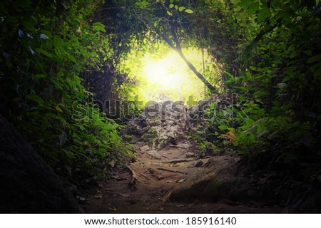 Natural tunnel in tropical jungle forest. Road path way through lush, foliage and trees of evergreen dense rain forest. Mysterious magic background - stock photo