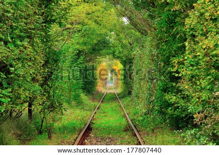 Natural tunnel of love formed by trees in Romania,Glimboca - stock photo