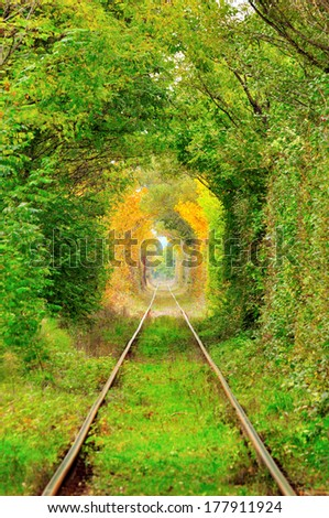"Natural ""tunnel of love"" formed by trees in Romania , in autumn - stock photo"