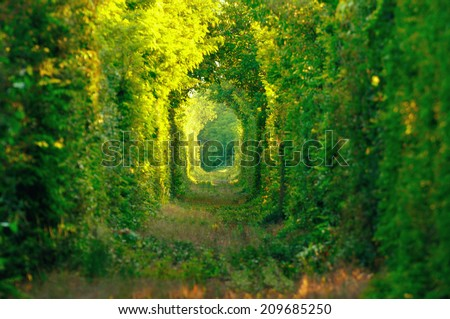 "Natural tunnel of ""love"" formed by trees in Romania. Railroad removed. - stock photo"