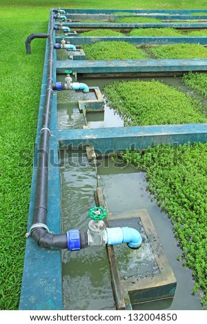 Natural waste water treatment plant