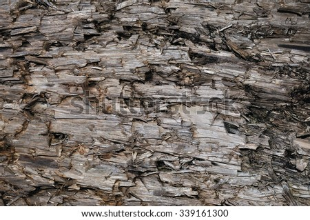 Natural Weathered Grey Taupe Brown Cut Tree Stump Texture, Large Horizontal Detailed Wounded Damaged Vandalized Gray Lumber Background Wood Macro Closeup, Dark Black Textured Cracked Wooden Pattern - stock photo