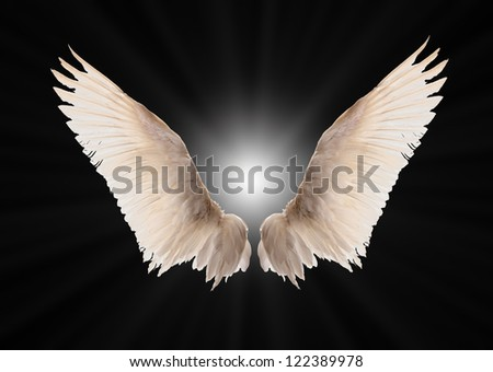 Natural white goose wings. - stock photo
