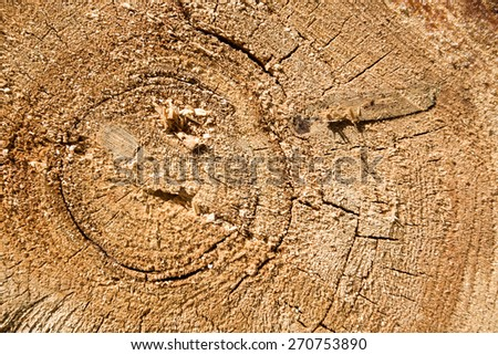natural wood texture of cut tree trunk, close-up - stock photo