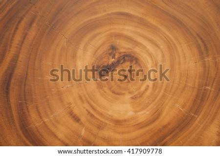 Natural  Wood Texture of cut tree trunk for Background - stock photo