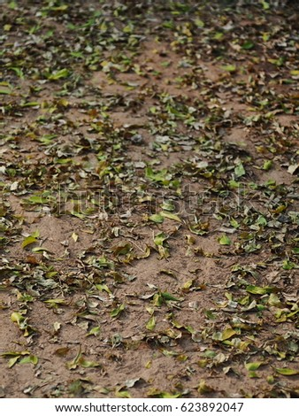 natural yellow brown dried leaves leafs falling on the jungle floor as backdrop background
