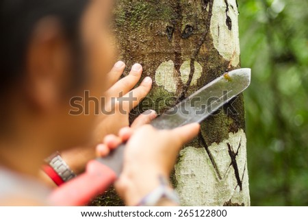 NATURALIST GUIDE EXPLAINING SANGRE DE GRADO EXTRACTION, FOCUS ON TREE BARK  - stock photo