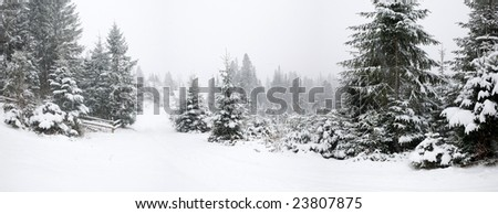 nature: a beautiful winter forest