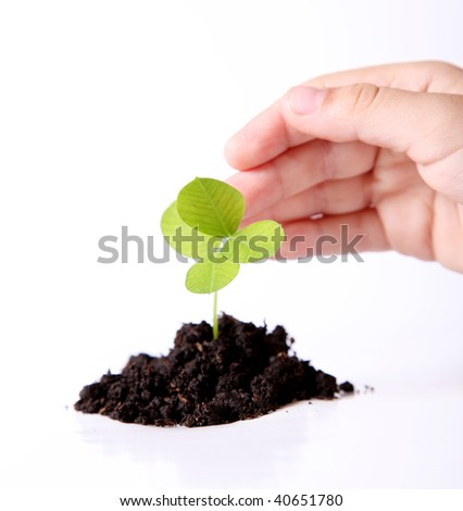 Nature. A plant sown over white background