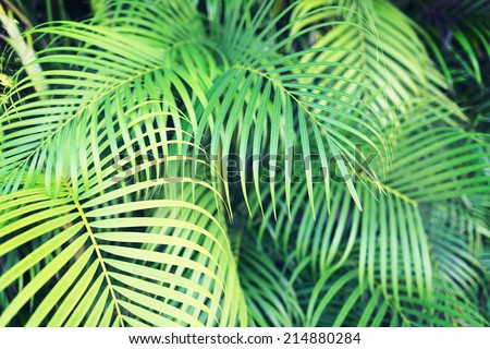 nature and background concept - close-up of palm tree leaves - stock photo