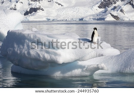 Nature and landscapes of Antarctic.Climatic and atmospheric changes. A penguin on an ice floe. - stock photo