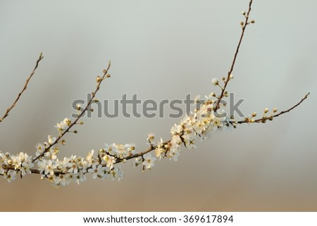 Nature and serenity Backgrounds - stock photo