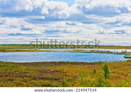 nature and vegetation in the permafrost of the Arctic Circle in the fall in the rays of the setting sun - stock photo