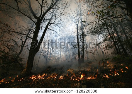 nature ash, burning forest, fireman working - stock photo