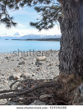 Nature at Lake Pukaki New Zealand