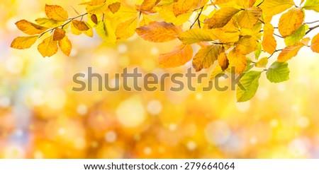 Nature autumn background with golden foliage - stock photo