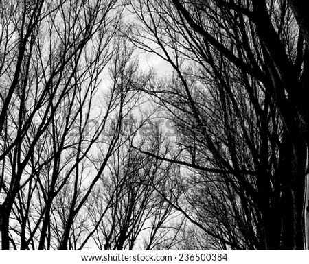 nature Autumn tree backgrounds black and white  - stock photo