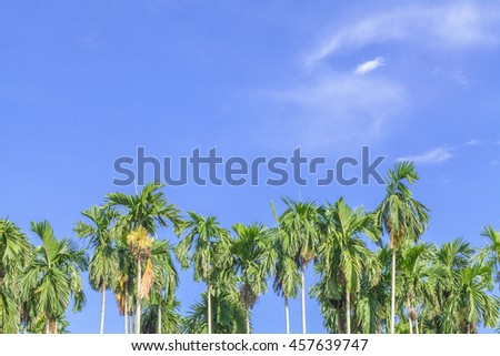 Nature background betel palm tree