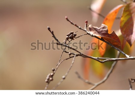 Nature background - color of autumn trees and dried leaves and branch. - stock photo