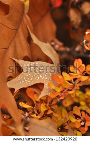 Nature background - colorful autumn trees and dried leaves with dew. - stock photo