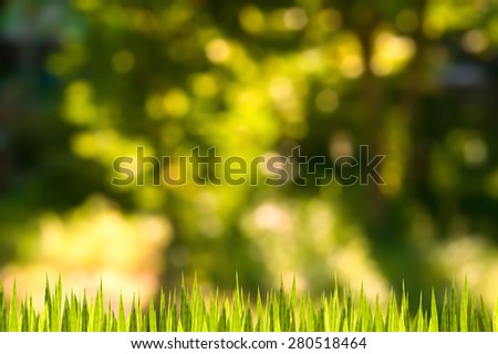 Nature background, grass and bokhe light - stock photo