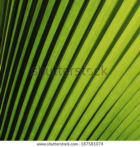 nature background, green palm leaf texture