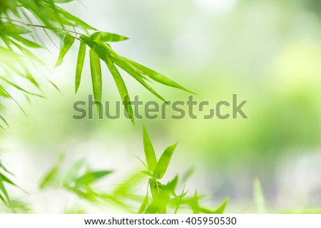nature background, nature background wallpaper, nature, green nature background, green wallpaper, backgrounds concept. - stock photo
