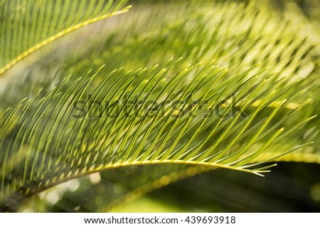 Nature background of green leaves with soft sun ray - stock photo