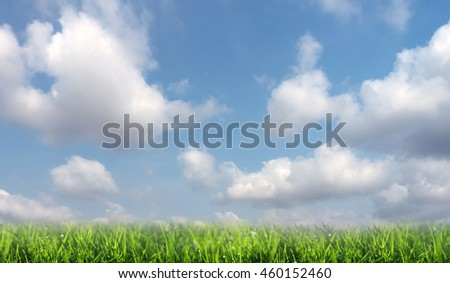 Nature background of green meadow and blue sky. - stock photo