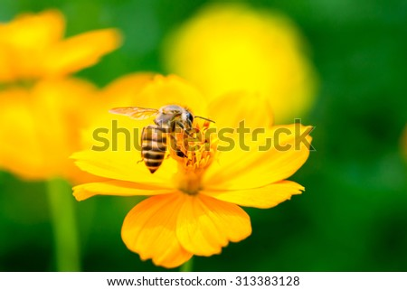 nature background, selective focus and space for text or image