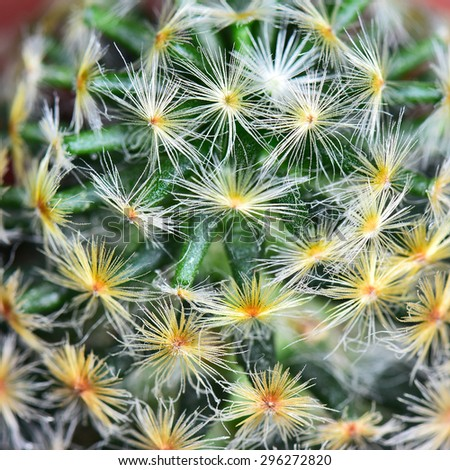 Nature background texture, green abstract cactus succulent plant, selective focus - stock photo