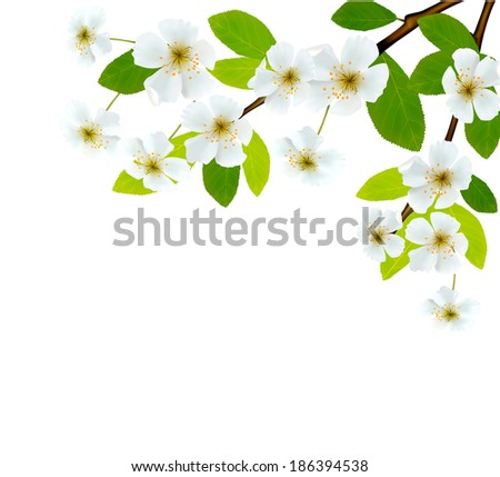 Nature background with blossoming tree brunch and blue sky.  Raster version - stock photo