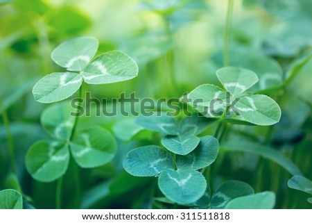 nature background with clover leaves - stock photo