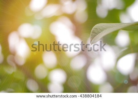 Nature background with sun light. Soft focus for background. - stock photo
