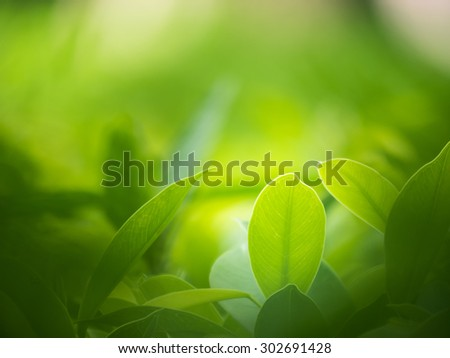 nature backgrounds, backgrounds concept. - stock photo