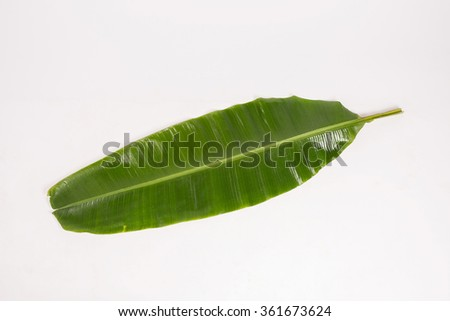 Nature banana leaf on background