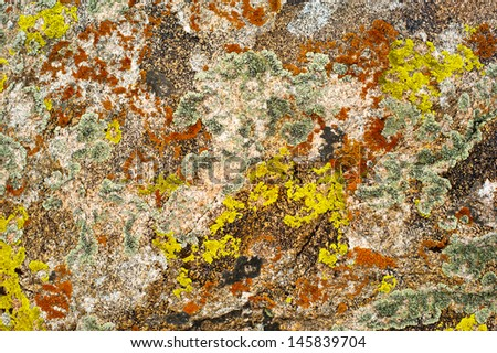 Nature colors background. Rock surface with lichen and moss texture - stock photo