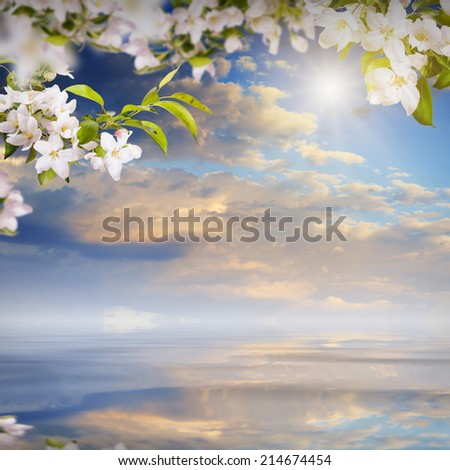 Nature composition. Apple flowers on a blurred sky background, reflected in water - stock photo