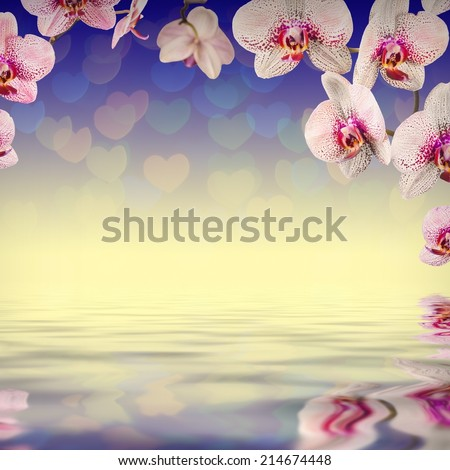 Nature composition. Orchid flowers on a colorful background, reflected in water - stock photo