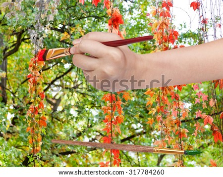 nature concept - hand with paintbrush paints red leaves of climbing plant in autumn