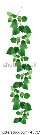 Nature concept. Nice border made from twigs with green leaves - stock photo