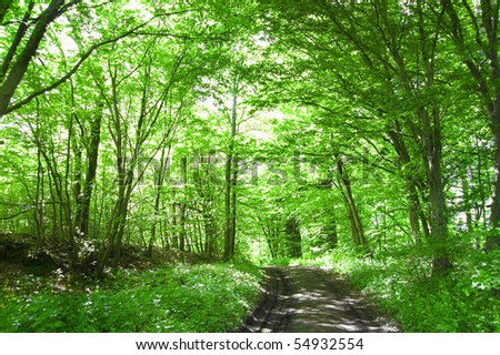 Nature conceptual image. Path in the green forest.