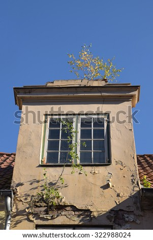 nature conquered an old house,