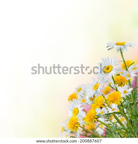 Nature floral background with place for your text