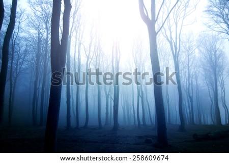 Nature. Fog in dark forest. - stock photo