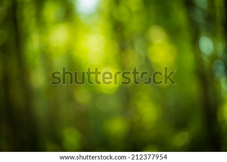 nature forest bokeh background - stock photo