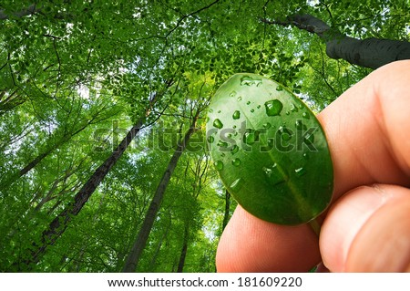 Nature forest preservation, ecology & environment  - stock photo