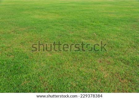 Nature Fresh Spring Green Lawn