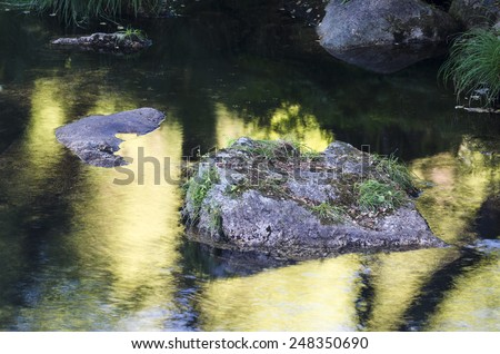 Nature golden - stock photo